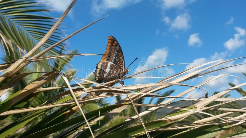 Batterfly zdjęcie stock