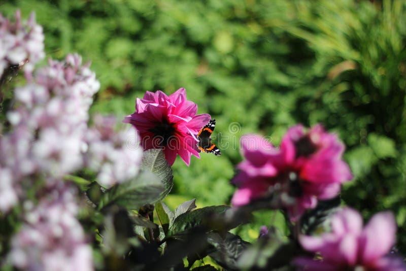 Batterfly royalty-vrije stock foto