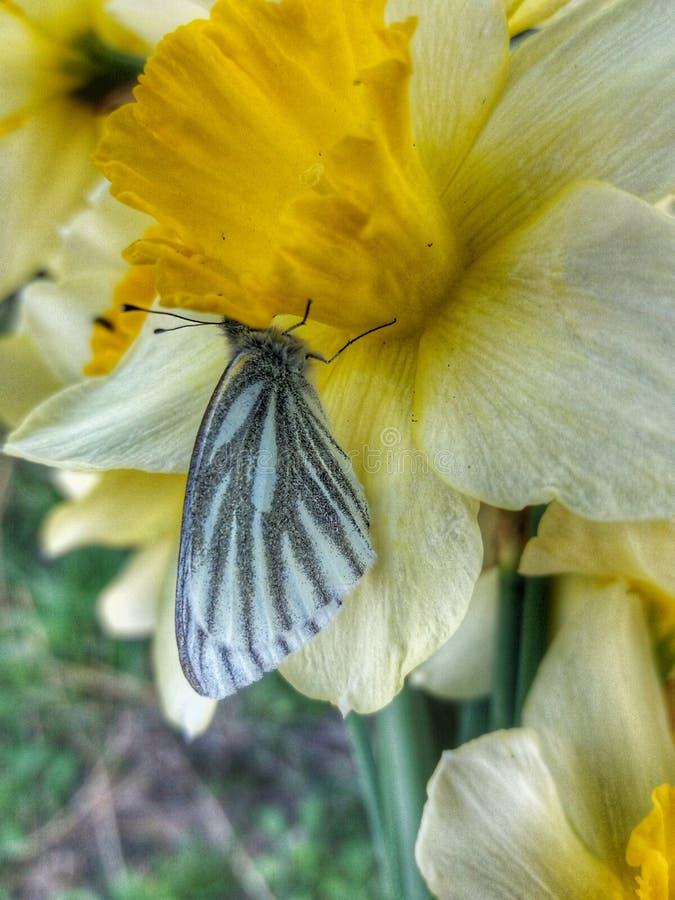 Batterfly stockfoto