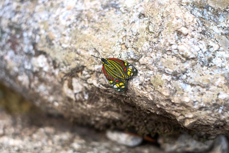 Batterfly su una roccia d'argento fotografia stock libera da diritti