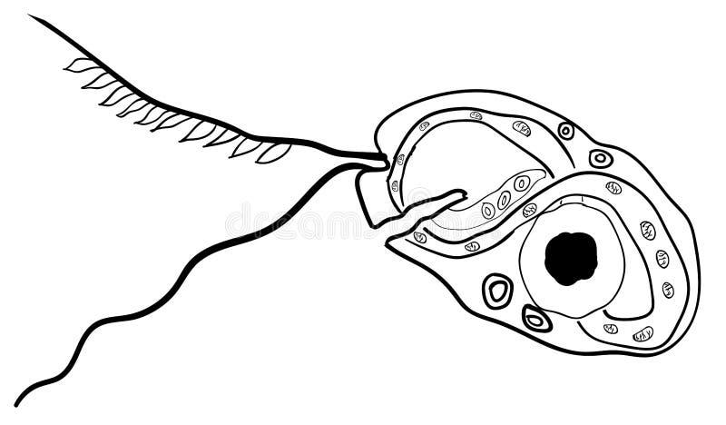 Batteri comuni di vettore che infettano essere umano 1 royalty illustrazione gratis