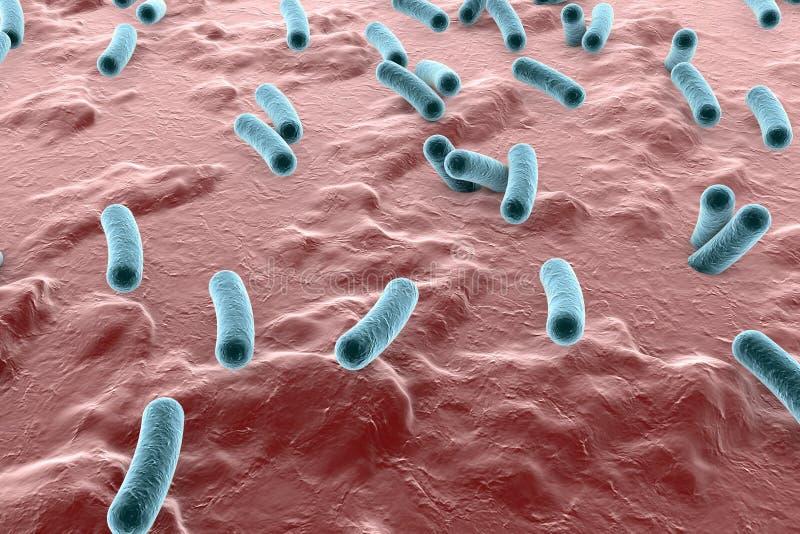 Batteri su superficie di pelle, della mucosa o dell'intestino illustrazione vettoriale