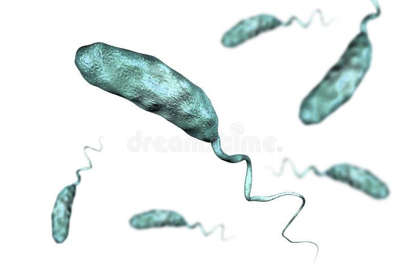 Batterio di vibrio cholerae royalty illustrazione gratis