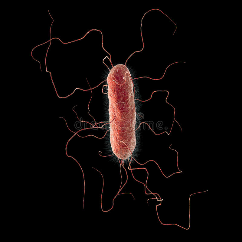 Batterio Proteus vulgaris illustrazione vettoriale