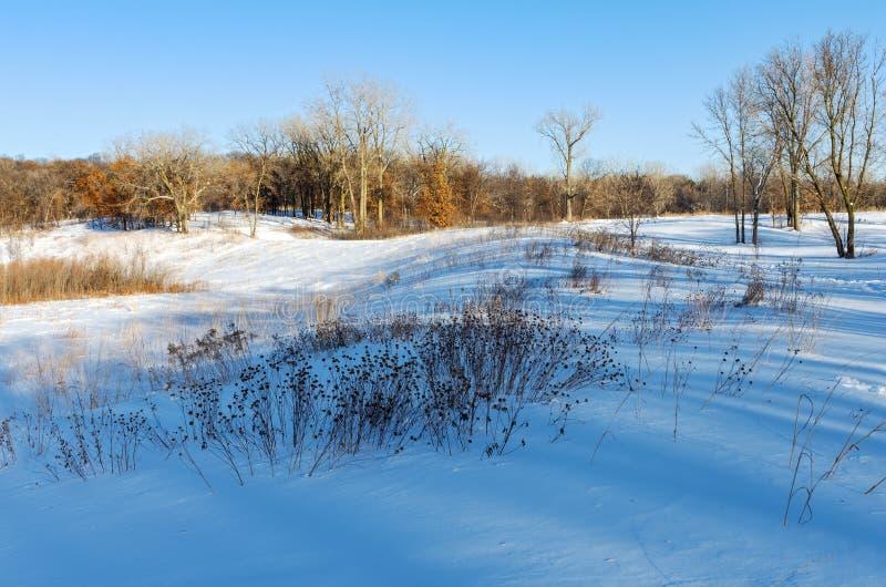 Battle Creek Prairie and Forest Landscape in Winter. Snow covered prairie and forest landscape in battle creek regional park of saint paul minnesota royalty free stock photos