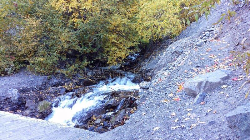 Battle-Creek Schlucht-Brücke - Bäume stockfotos