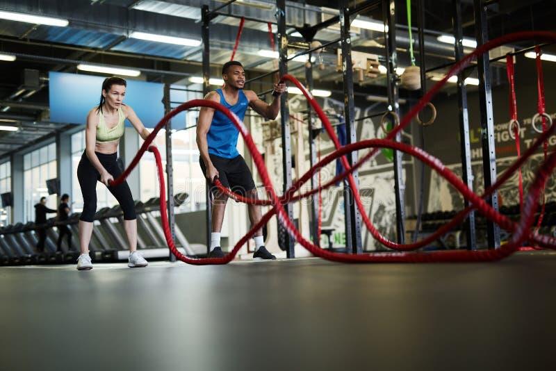 Battle Ropes Exercise stock image