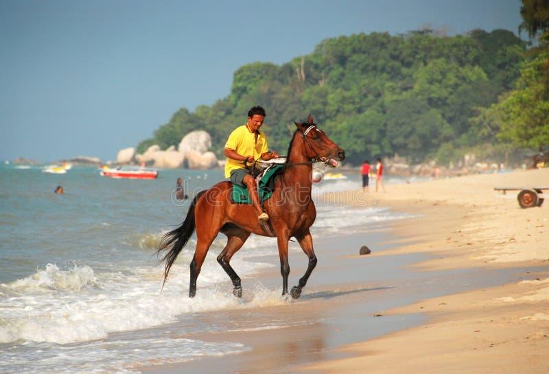 Batu Ferringhi, Maleisië: Paardrijden op Strand stock afbeeldingen
