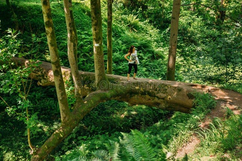 Batumi, Adjara, Georgia. Woman Tourist Is Standing On A Fallen T. Batumi, Adjara, Georgia - May 27, 2016: Woman Tourist Is Standing On A Fallen Tulip Tree During stock photo