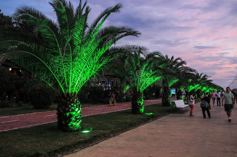 City embankment with palm trees illuminated with green light royalty free stock photography