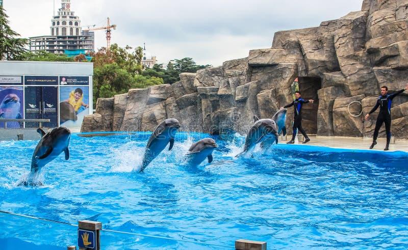 BATUMI 2015 instruktörer för GEORGIA-JULY 9 utför med utbildade delfin i den Batumi delfinariet royaltyfri bild