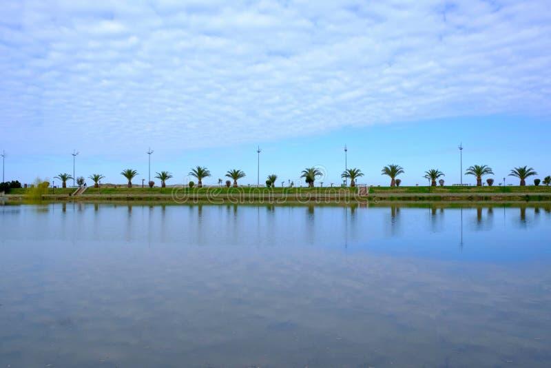 Batumi promenad som fodras med palmträd royaltyfri foto