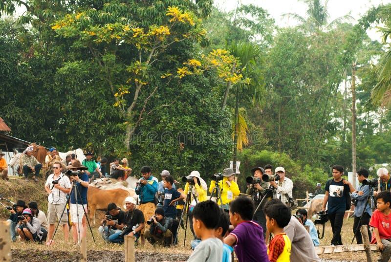 Batusangkar, Индонезия, 29-ое августа 2015: Группа в составе фотографы на гонке Pacu Jawi коровы, западной Суматре, стоковая фотография rf