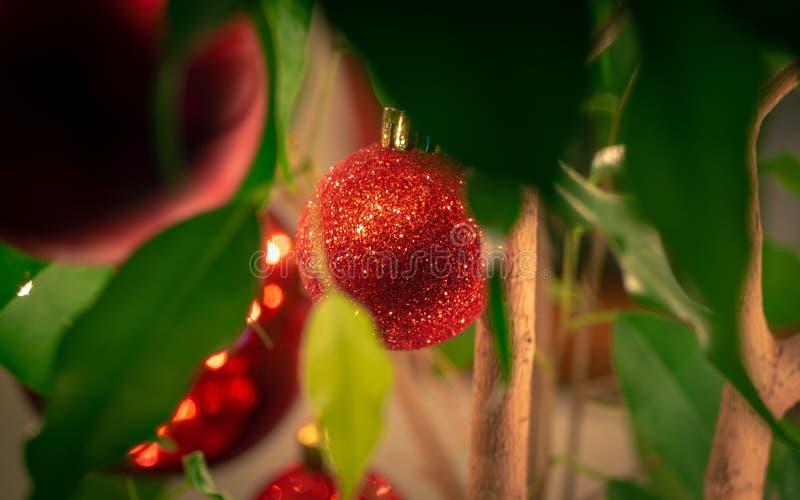 Bauble di Natale rosso scintillante - fotografato dalle foglie fotografia stock libera da diritti
