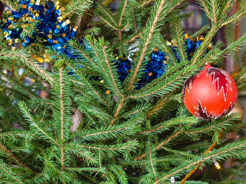 Bauble and tinsel on twigs of live Christmas Tree royalty free stock images