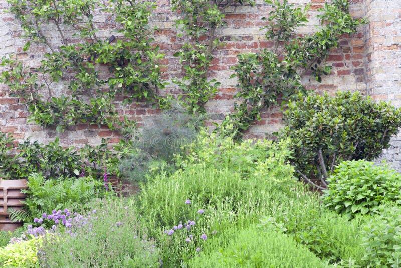 Bauen Sie Ihre eigenen Kräuter in ummauertem Garten an lizenzfreie stockfotos