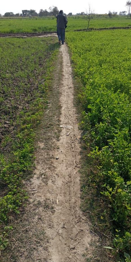 Bauernhöfe und Landwirte lizenzfreies stockbild