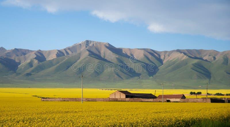 Bauernhaus bei Qinghai lizenzfreie stockfotografie