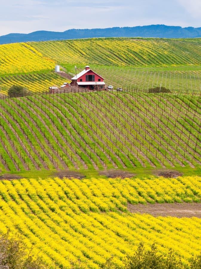 Bauernhaus in einem Weinberg lizenzfreie stockfotos