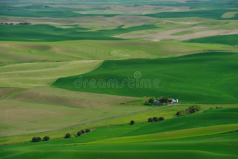Bauernhof auf dem Weizengebiet stockfoto