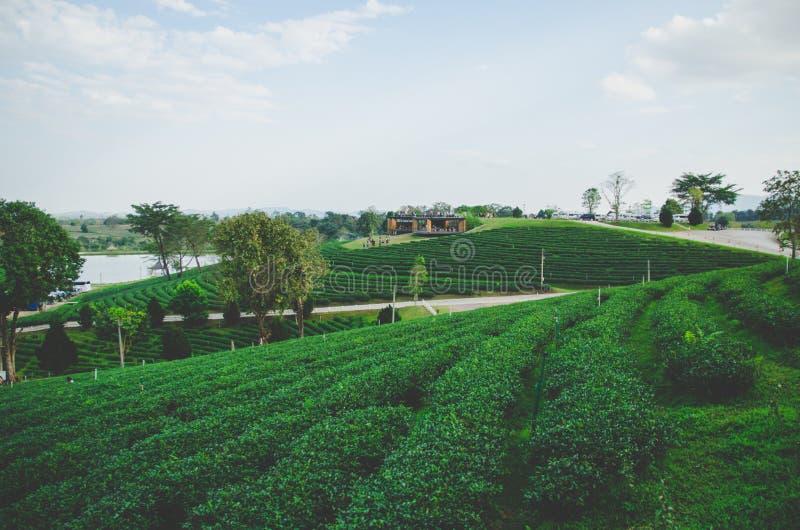 Bauernhof des grünen Tees mit Straße mit bewölktem Himmel stockfoto