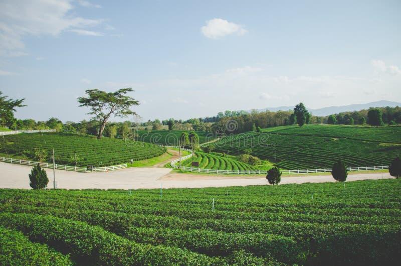 Bauernhof des grünen Tees mit Straße lizenzfreie stockfotografie