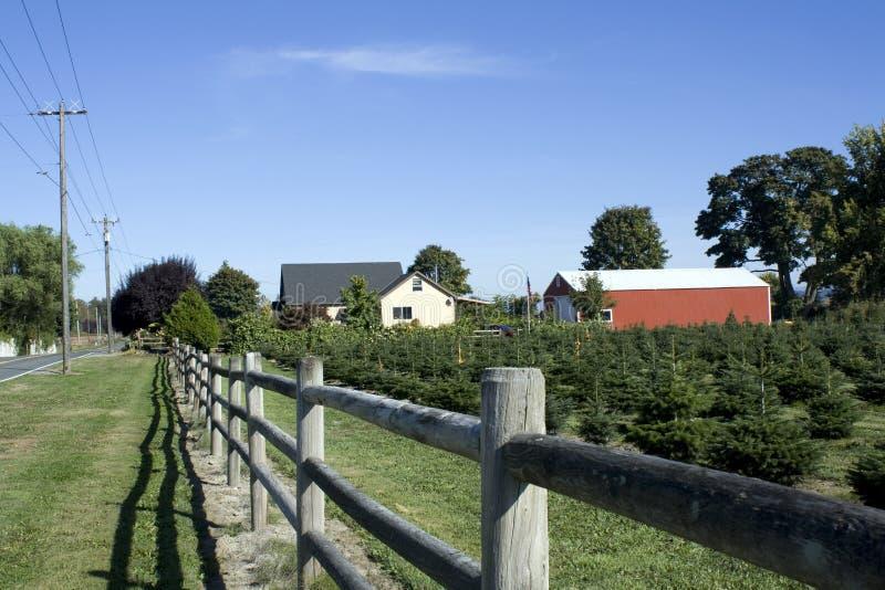 Bauernhof für Weihnachtsbäume