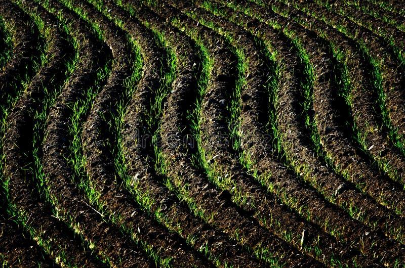 Bauernhof-Feld-gepflogene Schmutz-Grundfurchen bereit zum Pflanzen stockbild