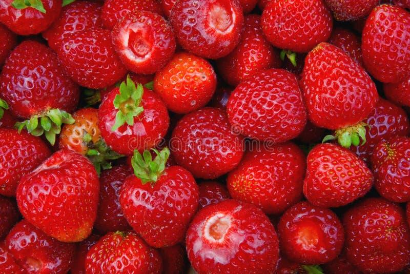 Bauernhof-frische Erdbeeren lizenzfreies stockbild