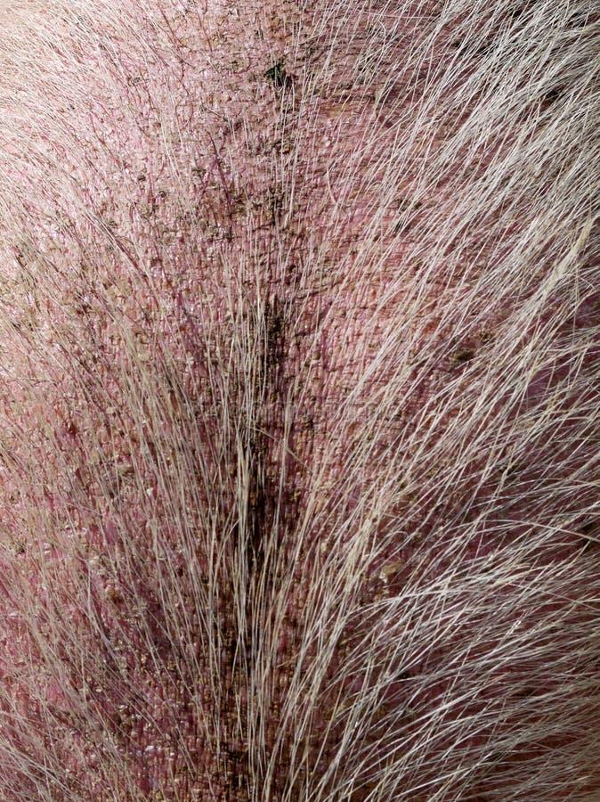 Bauernhof: haarige Haut des Schweins lizenzfreies stockbild