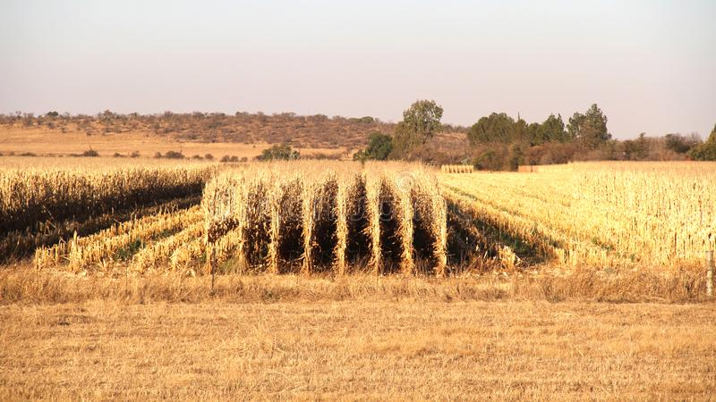 Bauernhof in Potchefstroom, Südafrika lizenzfreies stockbild
