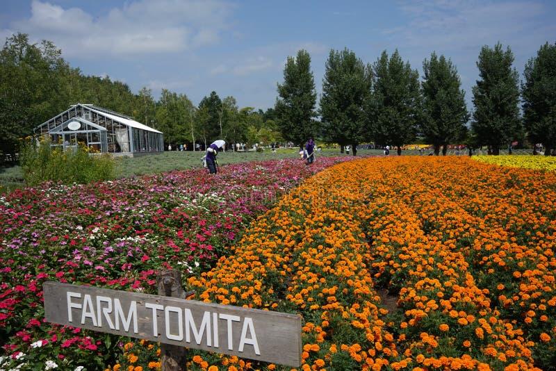 Bauernhof Tomita lizenzfreies stockbild