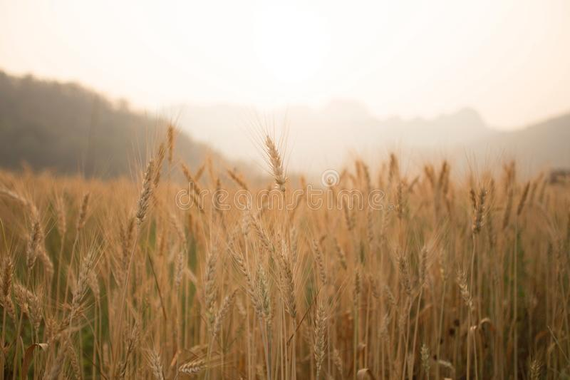 Bauernhof und die Sonne lizenzfreie stockfotografie