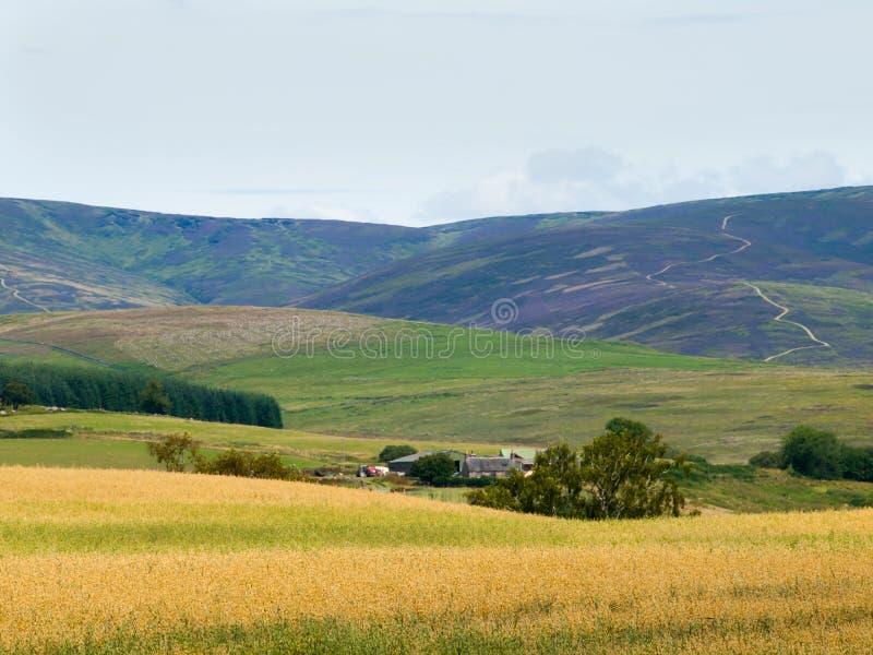 Bauernhof und Ernten in Glen Clova lizenzfreies stockbild