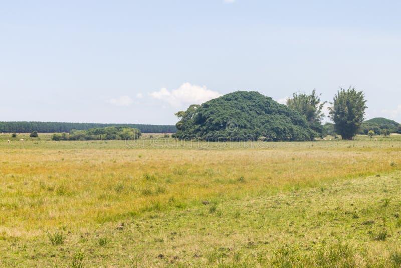 Bauernhof und vegeation Lagoa tun Peixe stockfotografie