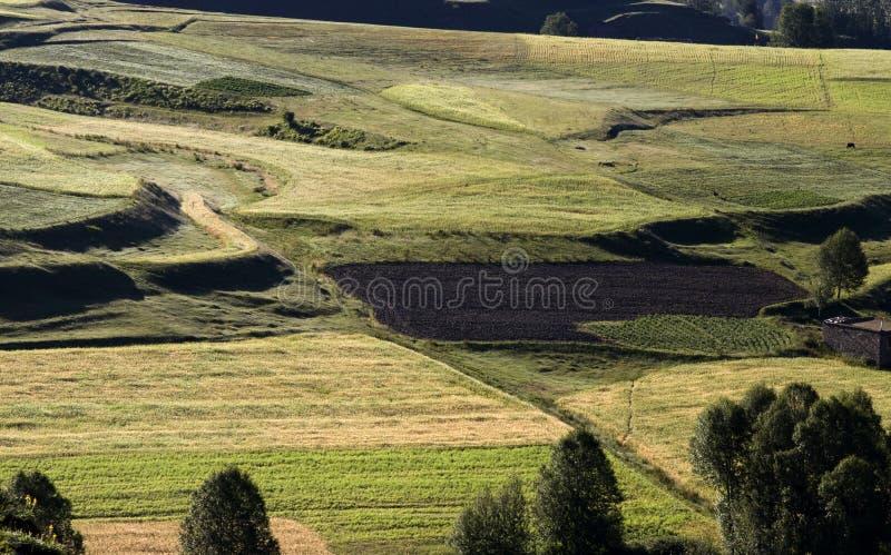 Bauernhoffeld auf Morgen lizenzfreies stockfoto