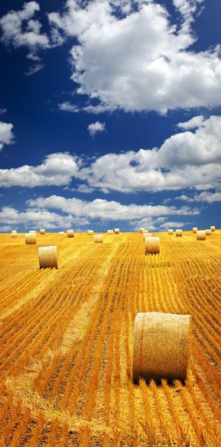 Bauernhoffeld mit Heuballen lizenzfreie stockfotos