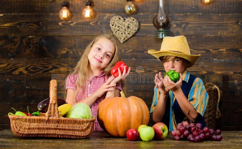 Bauernhofmarkt Bringt die Landwirtschaft Kindern bei, wohin ihre Nahrung von kommt Kinderlandwirtmädchen-Jungengemüse erntet Fami stockbild