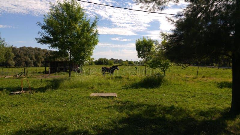 Bauernhofpferd sonnig stockbild