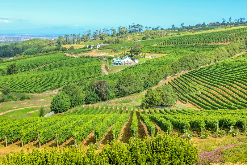 Bauernhofweinkellerei Südafrika lizenzfreies stockfoto