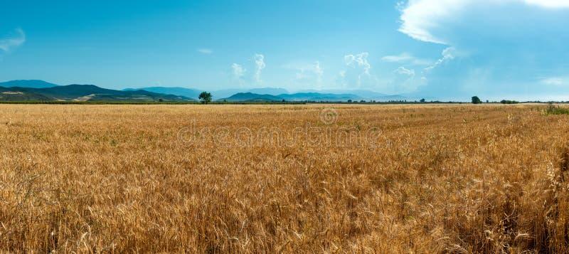 Bauernhofweizenfelder stockfotografie