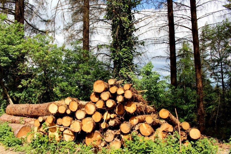 Bauholz-Stapel stockbild