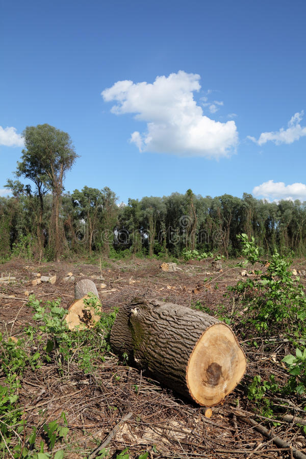 Bauholzindustrie lizenzfreie stockfotografie
