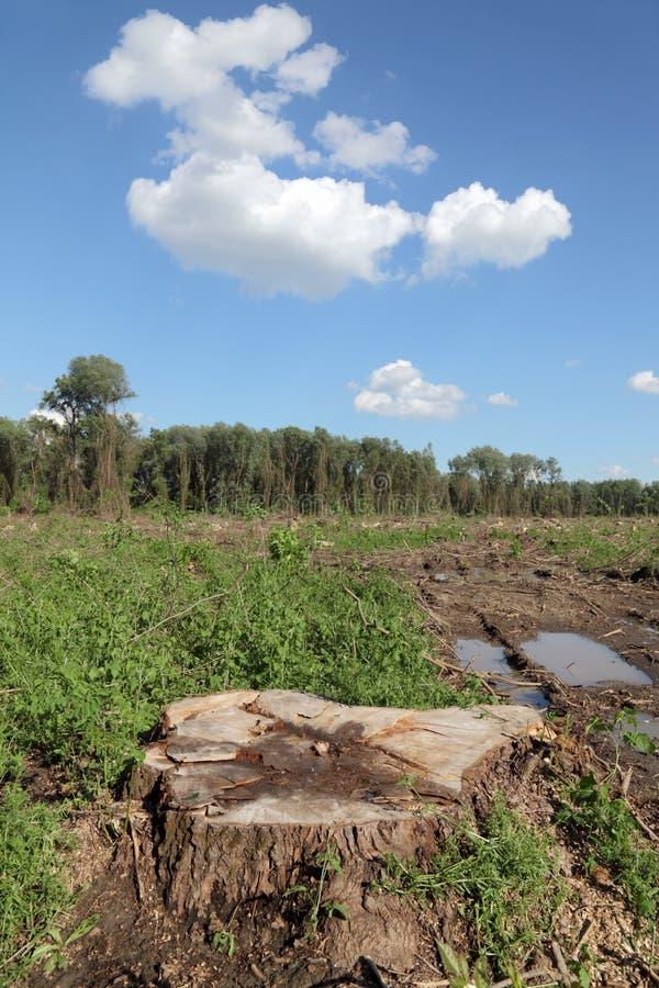 Bauholzindustrie stockbild