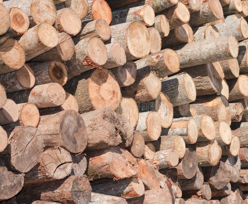 Bauholzprotokolle stockbilder