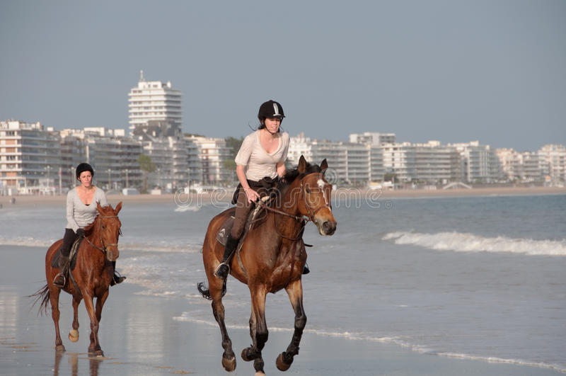 baule马背海滩法国la骑马 库存照片