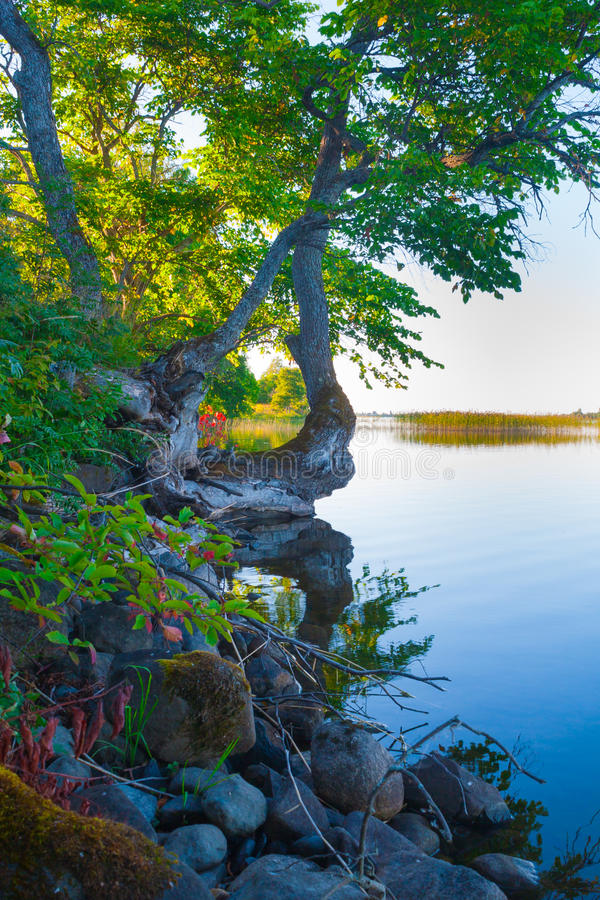 Baum über dem Wasser stockbilder