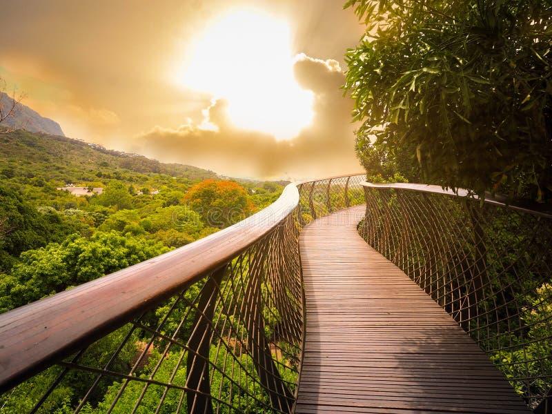 Baum-Überdachungs-Gehweg in Südafrika stockfoto