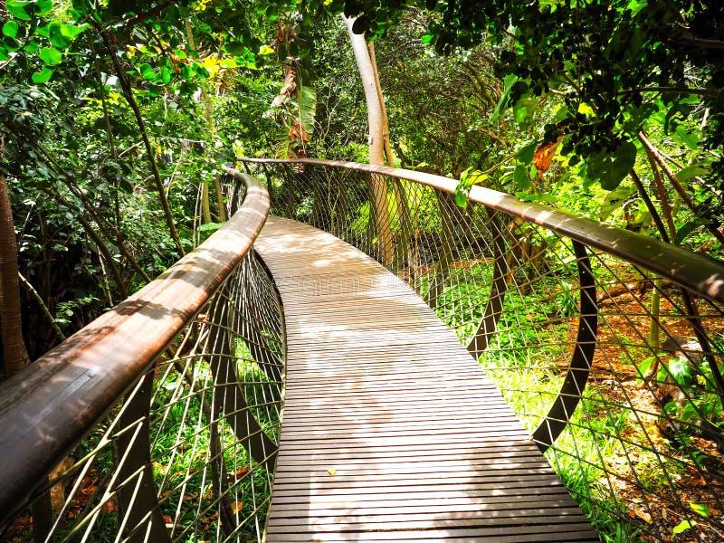 Baum-Überdachungs-Gehweg in Südafrika Hölzerne Brücke lizenzfreies stockfoto