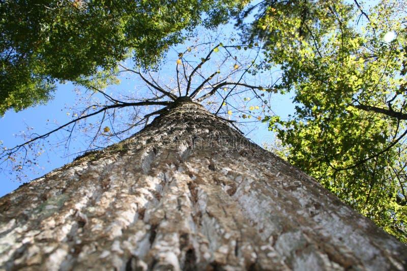 Baum stockfotos